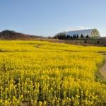 花巡りの丘(3月撮影)